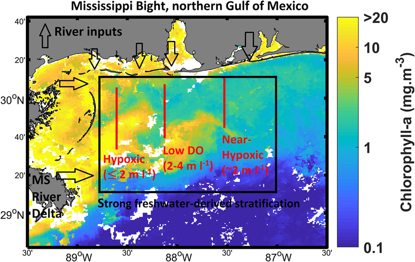 Hypoxia in the Mississippi Bight